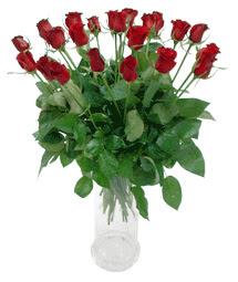 Kayseri çiçek hediye çiçek yolla  11 adet kimizi gülün ihtisami cam yada mika vazo modeli