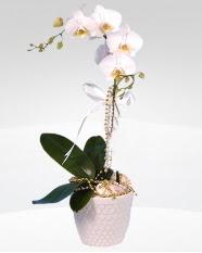 1 dallı orkide saksı çiçeği  Kayseri melikgazi çiçek çiçek yolla