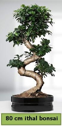 80 cm özel saksıda bonsai bitkisi  Kayseri çiçek hediye çiçek yolla
