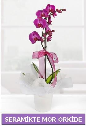 Seramik içerisinde birinci kalite tek dallı mor orkide  Kayseri akkışla çiçek çiçekçi telefonları