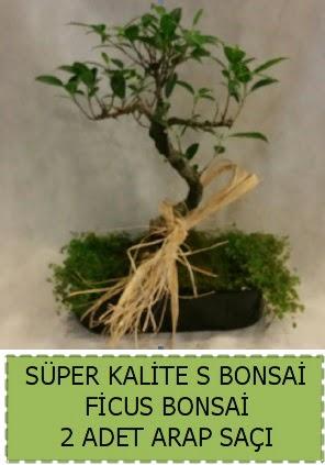 Ficus S Bonsai ve arap saçı  Kayseri çiçek hediye çiçek yolla