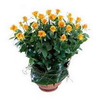 Kayseri çiçek hediye sevgilime hediye çiçek  10 adet sari gül tanzim cam yada mika vazoda çiçek