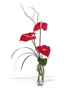 Kayseri çiçek çiçek siparişi vermek  cam yada mika Vazoda 3 adet  antoryum