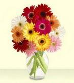 Kayseri çiçek çiçek gönderme  cam yada mika vazoda 15 özel gerbera