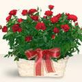Kayseri akkışla çiçek çiçekçi telefonları  11 adet kirmizi gül sepette
