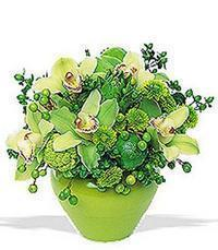 cam yada mika vazoda 5 adet orkide   Kayseri melikgazi çiçek çiçek yolla