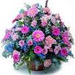 karisik mevsim kir çiçekleri  Kayseri çiçek çiçek satışı
