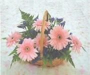 gerbera çiçeklerinde sepet   Kayseri özvatan çiçek çiçek , çiçekçi , çiçekçilik
