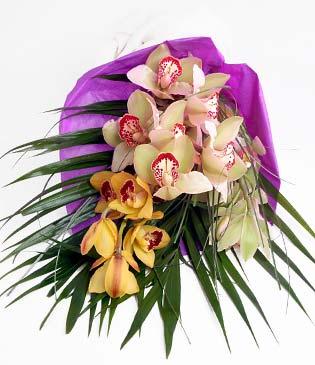 Kayseri çiçek hediye sevgilime hediye çiçek  1 adet dal orkide buket halinde sunulmakta