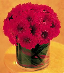 Kayseri çiçek internetten çiçek satışı  23 adet gerbera çiçegi sade ve sik cam içerisinde