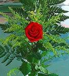 1 adet kirmizi gül buketi   Kayseri çiçek uluslararası çiçek gönderme