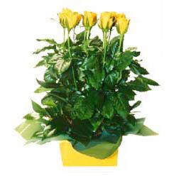 11 adet sari gül aranjmani  Kayseri melikgazi çiçek çiçek yolla