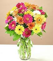 Kayseri çiçek güvenli kaliteli hızlı çiçek  17 adet karisik gerbera
