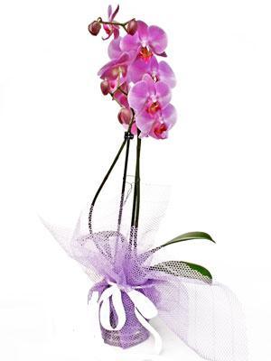 Kayseri çiçek çiçek mağazası , çiçekçi adresleri  Kaliteli ithal saksida orkide