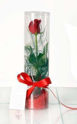 Kayseri özvatan çiçek çiçek , çiçekçi , çiçekçilik  Silindir vazoda tek kirmizi gül