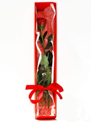 Kayseri hacılar çiçek çiçek gönderme sitemiz güvenlidir  1 adet kutuda gül