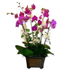 Kayseri çiçek anneler günü çiçek yolla  4 adet orkide çiçegi