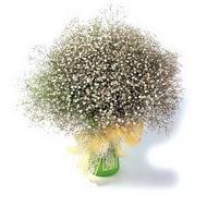 Kayseri çiçek online çiçekçi , çiçek siparişi  cam yada mika vazo içerisinde cipsofilya demeti