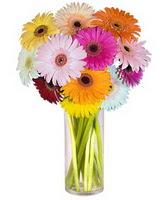 Kayseri çiçek cicekciler , cicek siparisi  Farkli renklerde 15 adet gerbera çiçegi