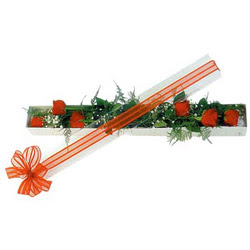 Kayseri çiçek çiçek siparişi vermek  6 adet kirmizi gül kutu içerisinde
