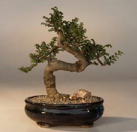 ithal bonsai saksi çiçegi  Kayseri çiçek çiçek servisi , çiçekçi adresleri