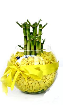 cam fanus içerisinde bambo  Kayseri çiçek online çiçek gönderme sipariş