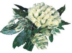 Kayseri çiçek cicekciler , cicek siparisi  9 Beyaz gül Özel kisiler için