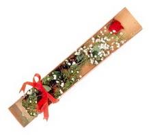 1 adet kirmizi gül  Kayseri çiçek hediye çiçek yolla