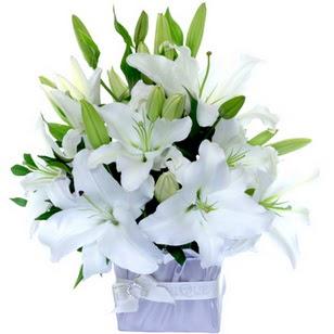 Kayseri özvatan çiçek çiçek , çiçekçi , çiçekçilik  2 dal cazablanca vazo çiçeği