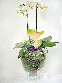 Kayseri çiçek çiçekçi mağazası  Cam yada mika vazoda özel orkideler