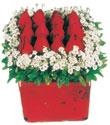 Kayseri çiçek ucuz çiçek gönder  Kare cam yada mika içinde kirmizi güller - anneler günü seçimi özel çiçek
