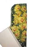 Kayseri çiçek ucuz çiçek gönder  Kutu içerisine dal cymbidium orkide