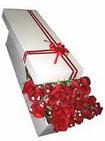 Kayseri çiçek hediye çiçek yolla  11 adet 1.kalite magnum güller