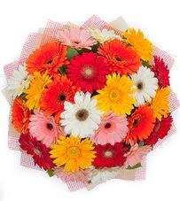 15 adet renkli gerbera buketi  Kayseri hacılar çiçek çiçek gönderme sitemiz güvenlidir
