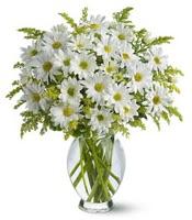 Vazo içerisinde beyaz krizantem çiçekleri  Kayseri çiçek internetten çiçek siparişi