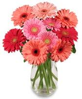 vazo içerisinde 13 adet gerbera çiçeği  Kayseri çiçek çiçek siparişi vermek