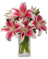 Vazo içerisinde 5 dal kazablanka çiçeği  Kayseri çiçek hediye sevgilime hediye çiçek