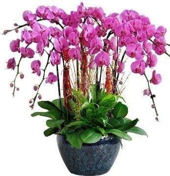 9 dallı mor orkide  Kayseri çiçek çiçek servisi , çiçekçi adresleri