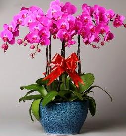 7 dallı mor orkide  Kayseri çiçek güvenli kaliteli hızlı çiçek