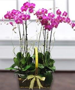 4 dallı mor orkide  Kayseri kocasinan çiçek İnternetten çiçek siparişi