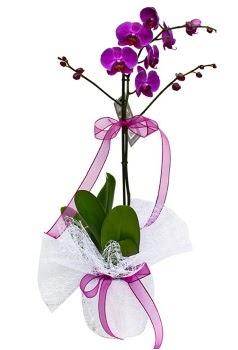 Tek dallı mor orkide  Kayseri çiçek hediye çiçek yolla