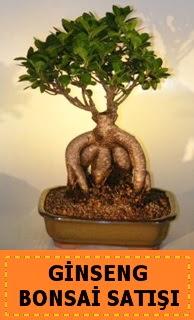 Ginseng bonsai satışı japon ağacı  Kayseri çiçek anneler günü çiçek yolla
