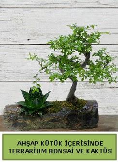 Ahşap kütük bonsai kaktüs teraryum  Kayseri çiçek cicekciler , cicek siparisi