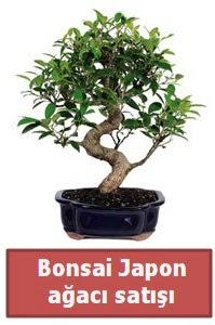 Japon ağacı bonsai satışı  Kayseri çiçek çiçek siparişi vermek