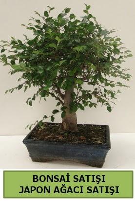 Minyatür bonsai japon ağacı satışı  Kayseri çiçek çiçek satışı