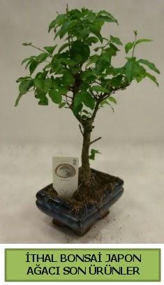 İthal bonsai japon ağacı bitkisi  Kayseri çiçek kaliteli taze ve ucuz çiçekler