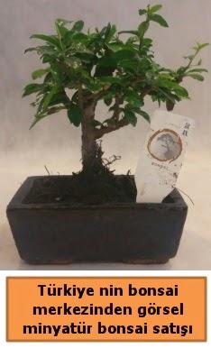 Japon ağacı bonsai satışı ithal görsel  Kayseri özvatan çiçek çiçek , çiçekçi , çiçekçilik