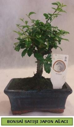 Minyatür bonsai ağacı satışı  Kayseri çiçek ucuz çiçek gönder