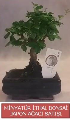 Küçük görsel bonsai japon ağacı bitkisi  Kayseri çiçek çiçek siparişi sitesi