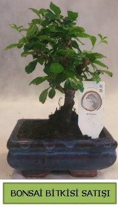 Bonsai ithal görsel minyatür japon ağacı  Kayseri çiçek internetten çiçek satışı